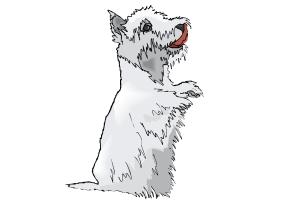 Hunde Ausmalbilder Kostenlos Ausdrucken